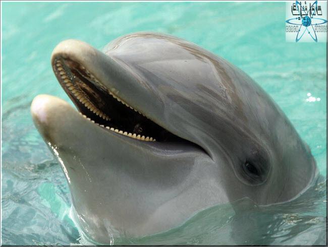 دلفین ها می توانند با جملات کامل با هم صحبت کنند