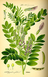 برای درمان بیماریهای گوارشی کدام گیاه شناخته شده است؟ | دارچین،گل گاو زبان،شیرین بیان