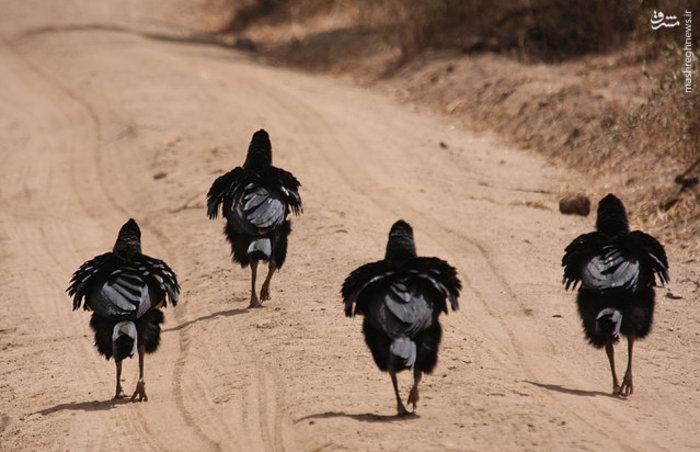 عکس/ دیدنیهای دنیای حیوانات