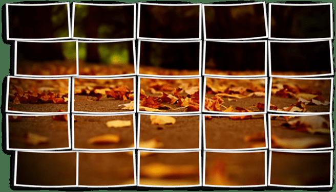 برگ های خزان