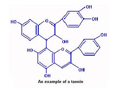 ساختار شیمیایی تانن