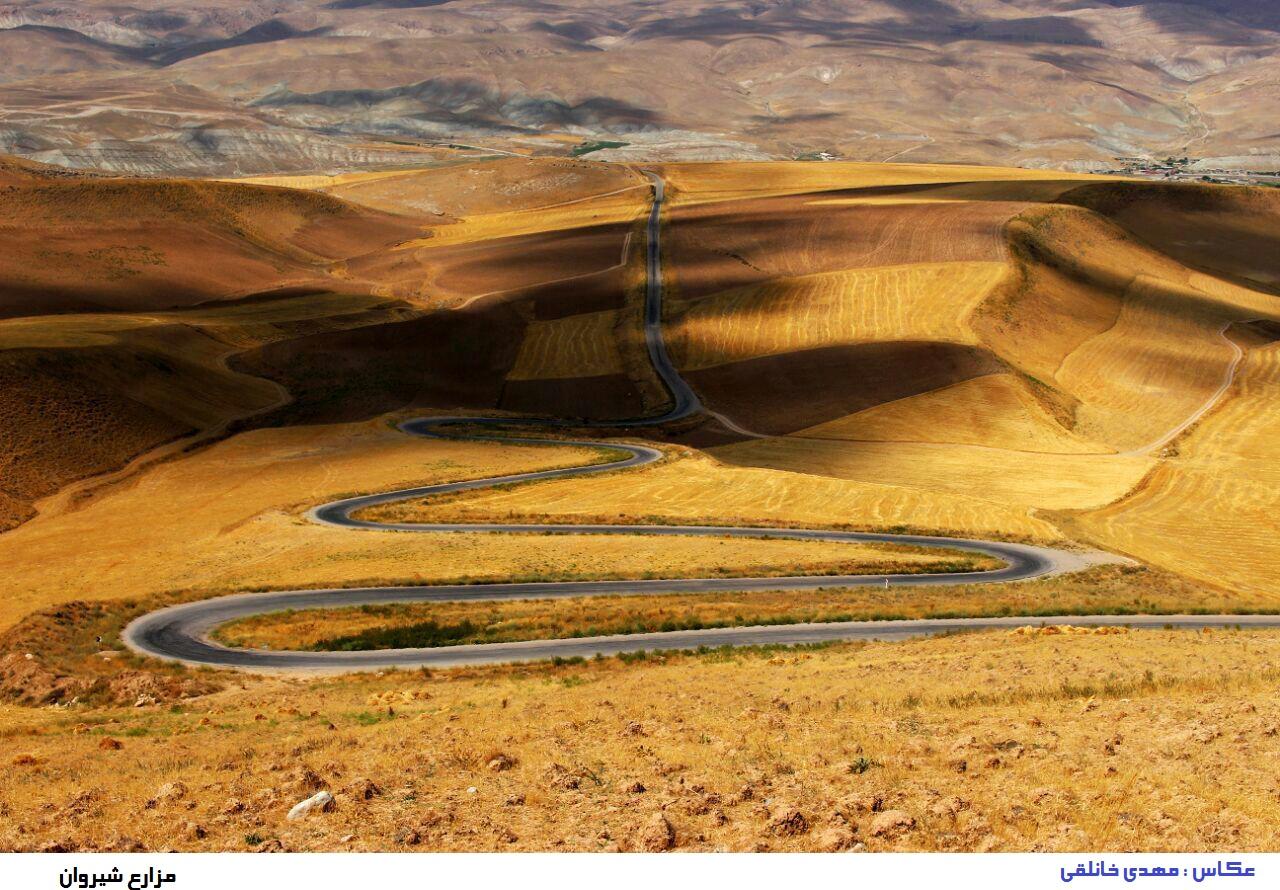 عکسی زیبا از مزارع شهرستان شیروان