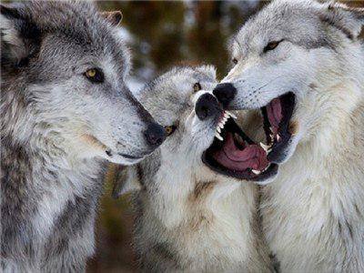 حیوانات وحشی و درنده