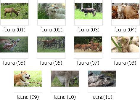 http://s9.picofile.com/file/8272008342/pic_fauna_01.JPG