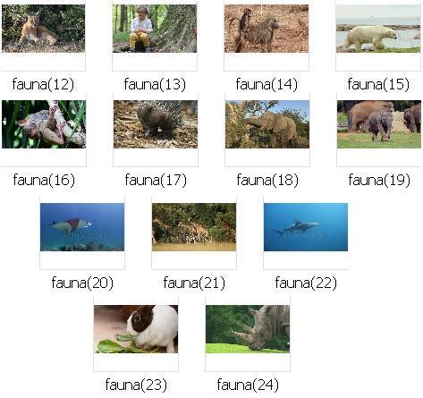 http://s9.picofile.com/file/8272008376/pic_fauna_02.JPG