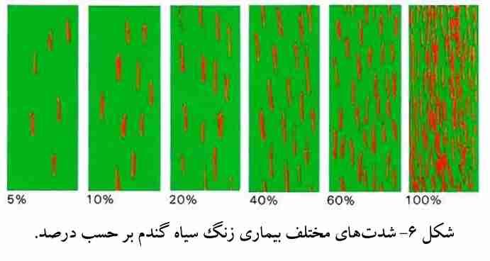 شدتهای مختلف بیماری زنگ سیاه