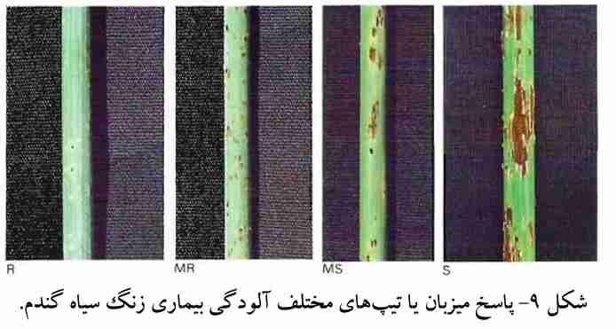پاسخ میزبات با تیپ های مختلف آلودگی بیماری زنگ سیاه