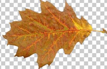 http://s9.picofile.com/file/8272420692/barg_payiz.jpg