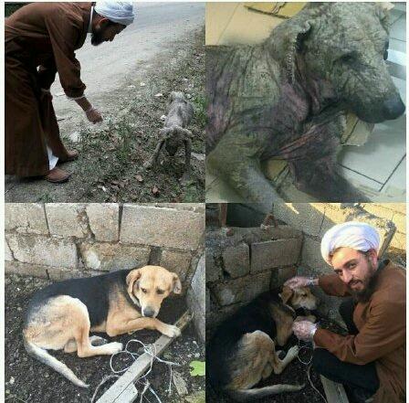 طلبهاي که حامي سگهاي بي پناه شد!