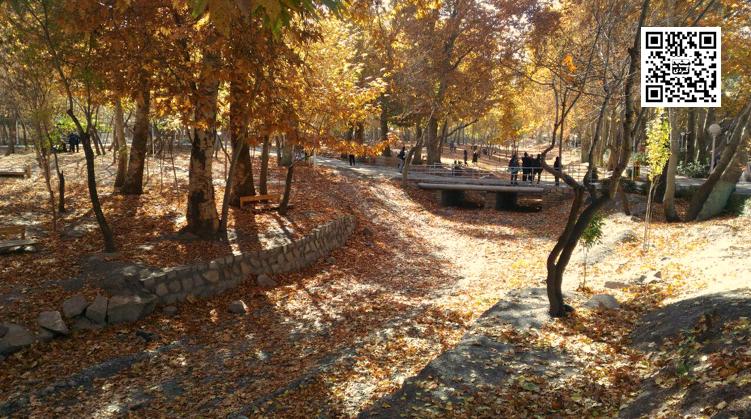 بوستان جنگلی وکیل آباد