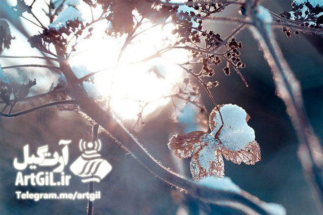 لذت عکاسی در فصل برف وسرما با رعایت ۸ نکته کلیدی