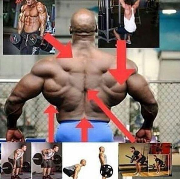 عضلات هدف در حرکات مختلف بدنسازی