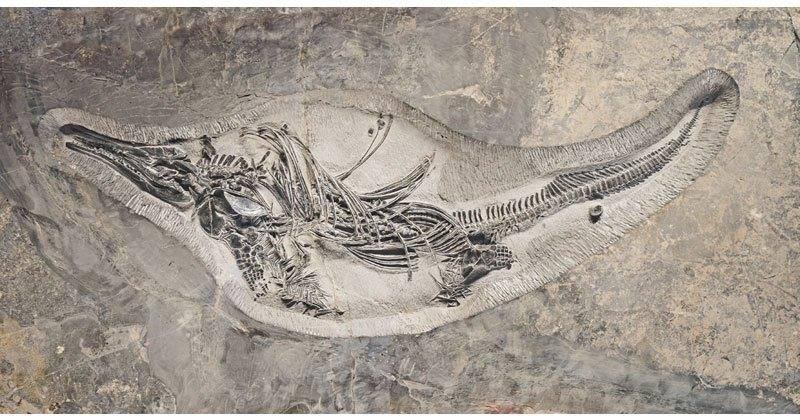 عکس نایاب از یک فسیل