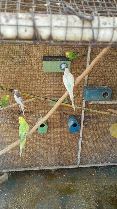 لانه پرندگان پارک آزادی