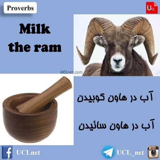آب در ÙاÙÙ Ú©ÙبÛد٠- Milk the ram - Ø¢ÙÙزش ضرب اÙÙØ«Ù ÙØ§Û Ø²Ø¨Ø§Ù Ø§ÙÚ¯ÙÛسÛ