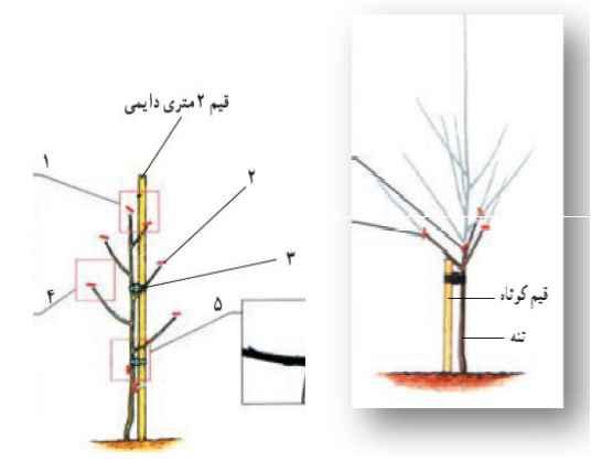 قیم زنی در پای درختان کاشته شده