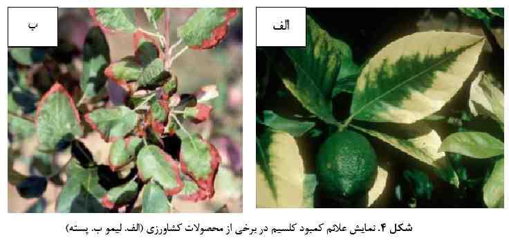 علایم کمبود کلسیم در لیمو و پسته