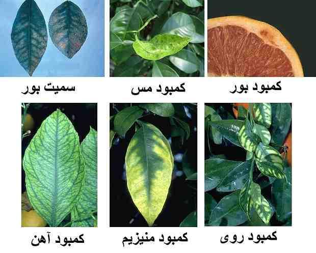 کمبود مواد غذایی در گیاهان