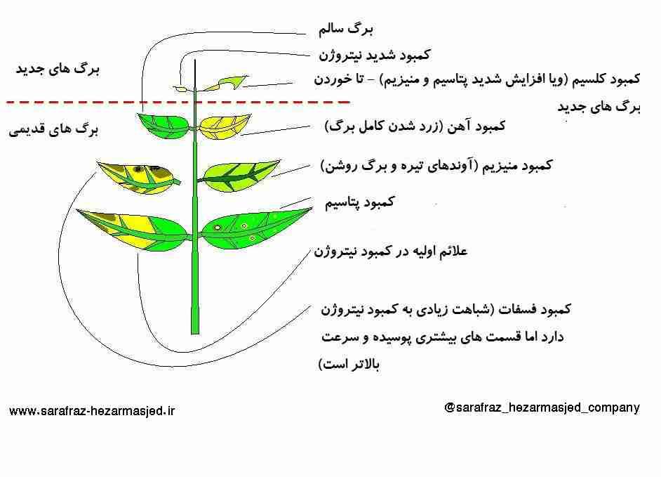 اینوگراف کمبود علایم غذایی در برگ گیاهان