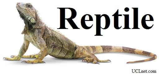Reptile – آموزش لغات کتاب ۵٠۴ – English Vocabulary – کدینگ لغات ۵٠۴