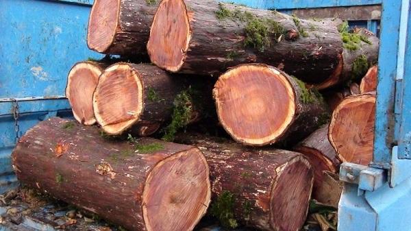 چوب درخت سرخدار