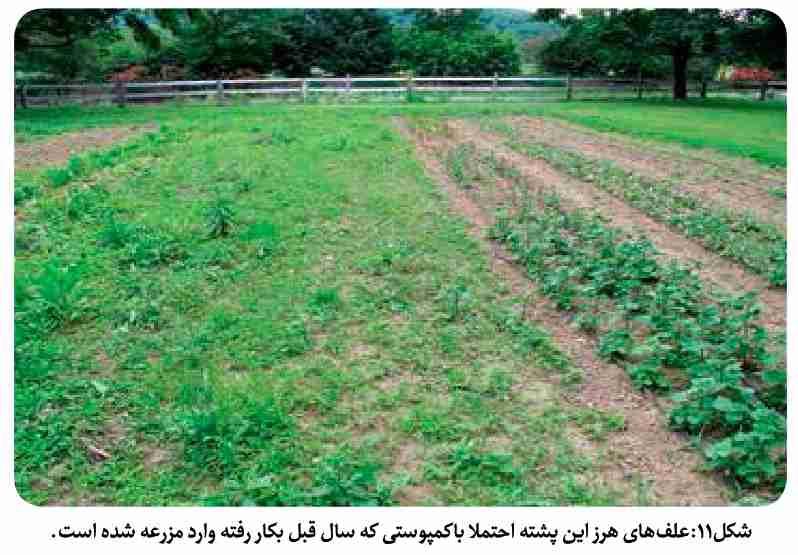 وارد شدن علف هرز به مزارع از طریق کمپوست آلوده به بذر