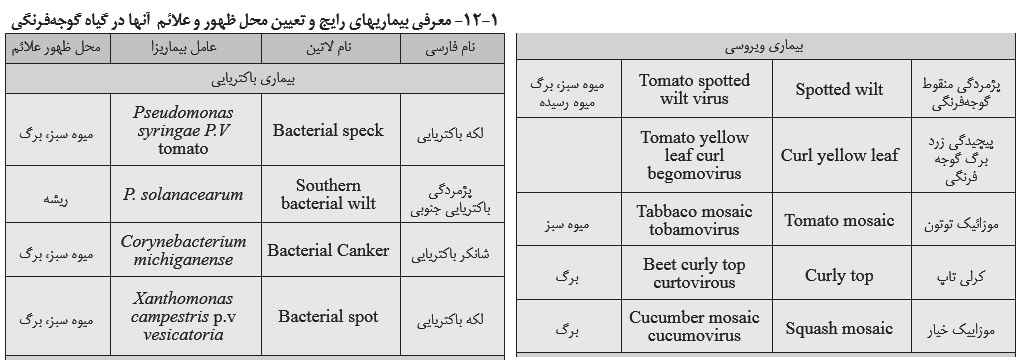 معرفی بیماریهای رایج گوجه فرنگی و تعیین محل ظهور و علایم آن