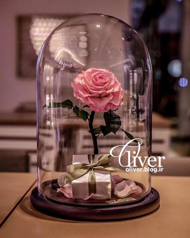 این گلهای رز هیچوقت از بین نمیرن