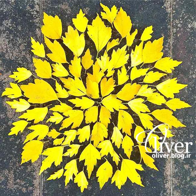 خلاقیت مردم ژاپن با برگهای درخت