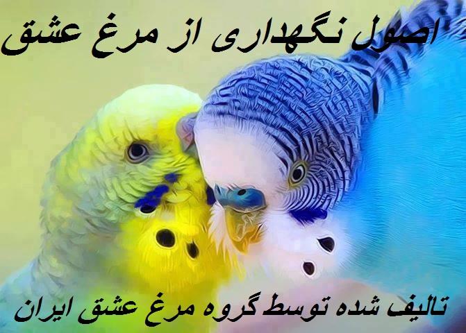نگهداری از مرغ عشق