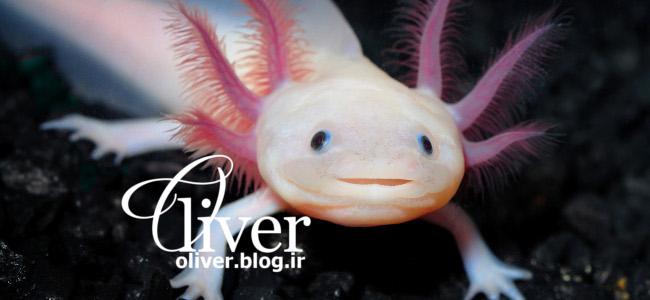 شادترین ماهی دنیا