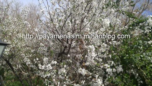 http://s9.picofile.com/file/8290641084/4_2_.jpg