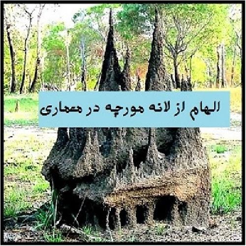 معماری لانه ی مورچه انسان طبیعت معماری