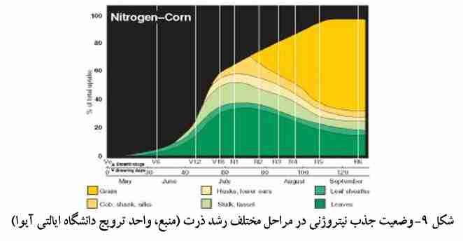 وضعیت جذب نبتروژن در مراحل مختلف رشد ذرت