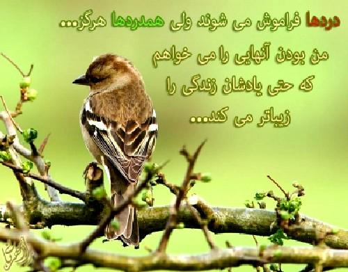 http://s9.picofile.com/file/8292617634/HAMDARDHAA_1.jpg