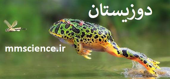 دوزیستان