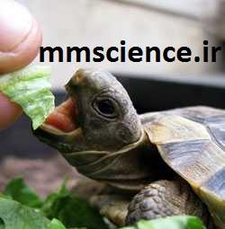 تغذیه لاکپشت