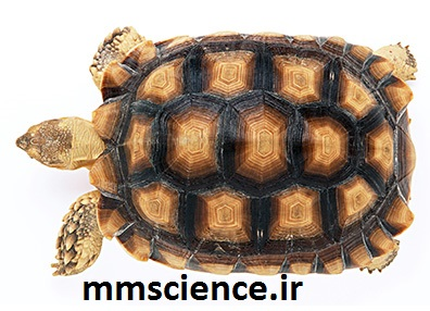 لاکپشت خشکی زی