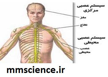ستگاه عصبی محیطی و مرکزی