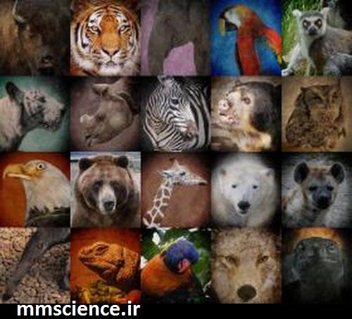 تنوع زیستی