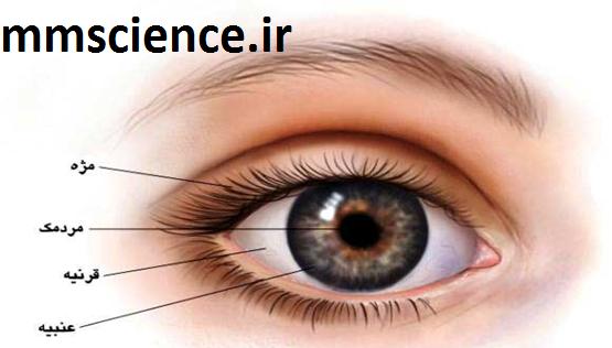 آناتومی خارجی چشم
