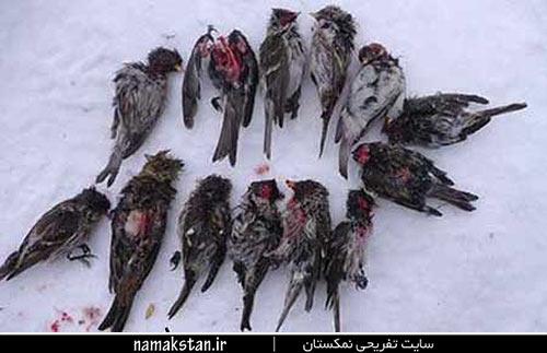 [عکس: zombie_wild_bird_photos_2.jpg]