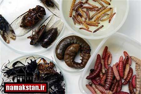 [عکس: Beetles_and_grasshoppers_eat_a_Teacher_photos_6.jpg]