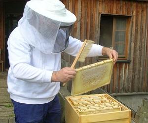 اموزش پرورش زنبور عسل