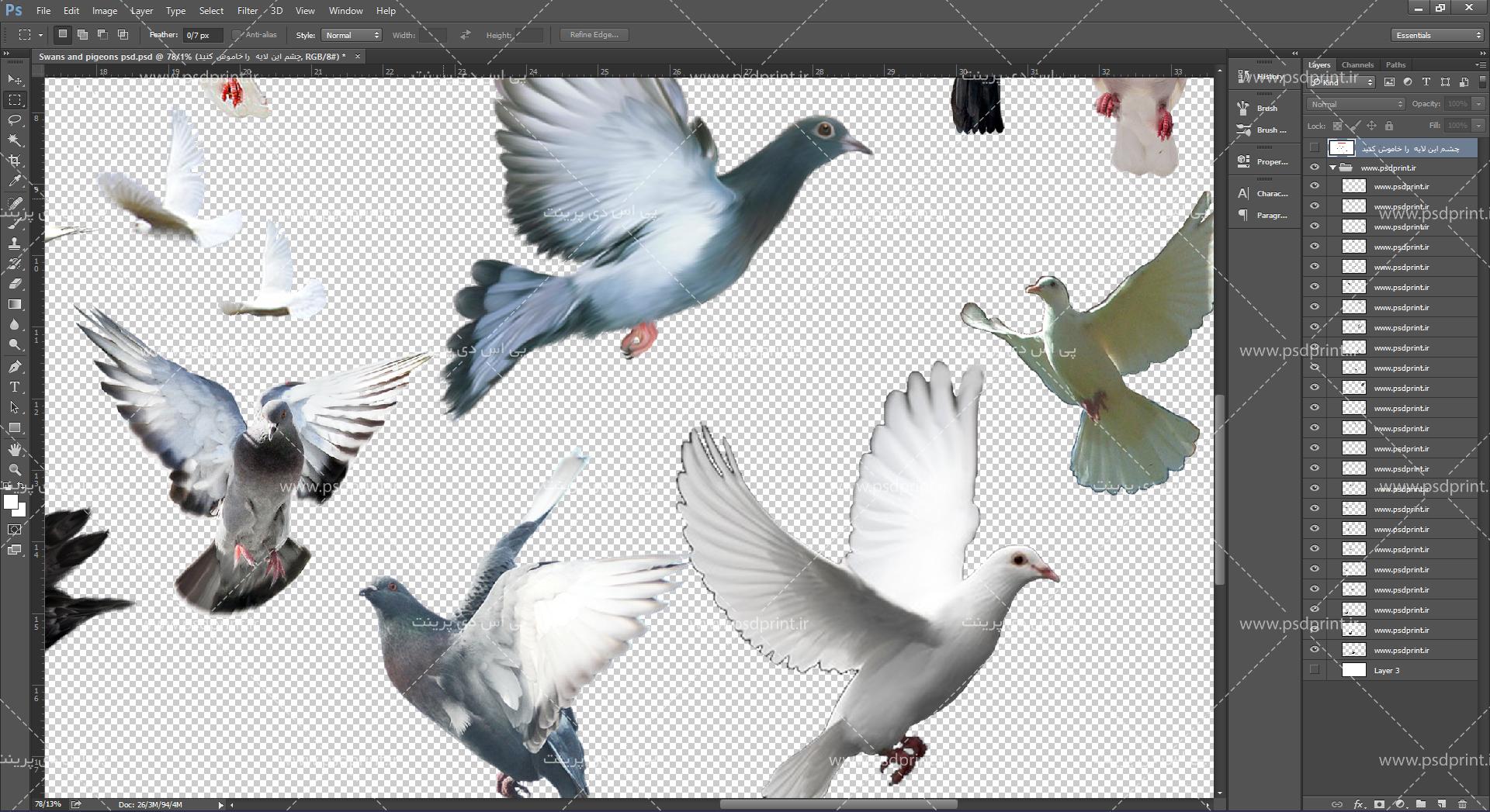 طرح لایه باز کبوتر