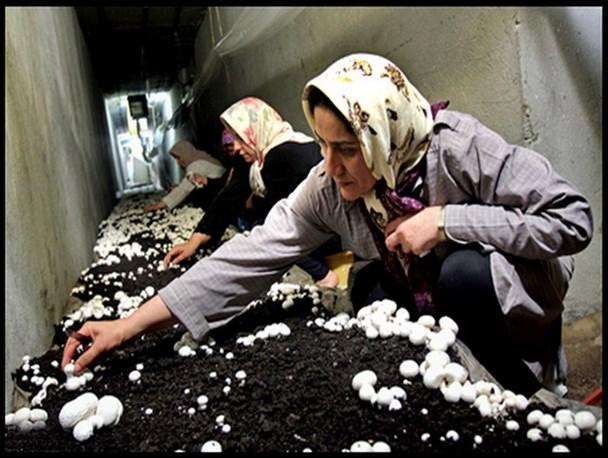 پروین افشار کارآفرین در عرصه کشت قارچ