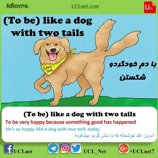 با دم خودگردو شکستن – To be like a dog with two tails – اصطلاحات زبان انگلیسی – English Idioms