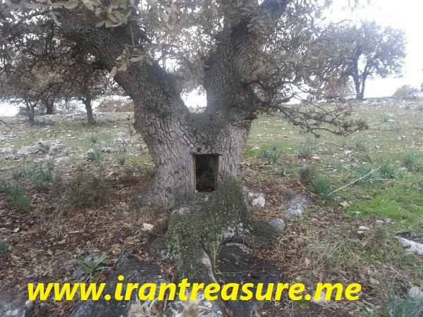 agac درختان در دفینه یابی (گلابی وحشی، درخت عرعر، بلوط، چنگال، سرو، گردو، توت و ...)