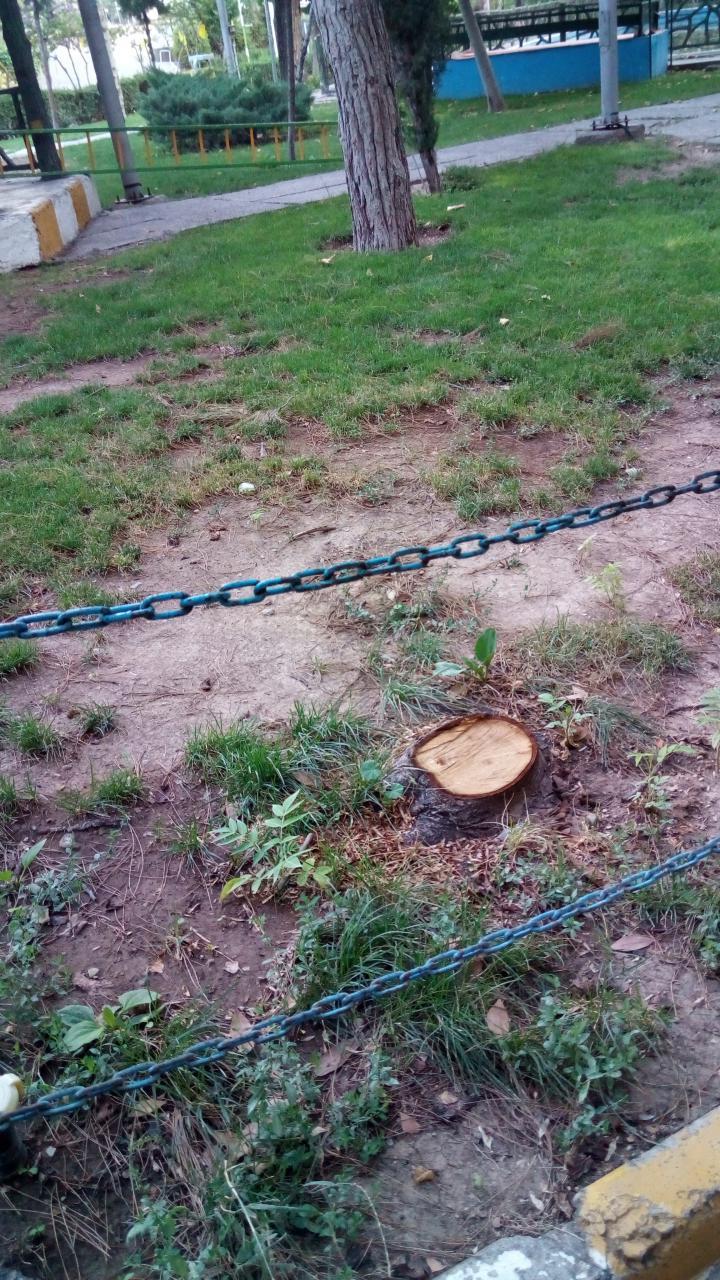 قطع درختان در دانشگاه امام صادق علیهالسلام