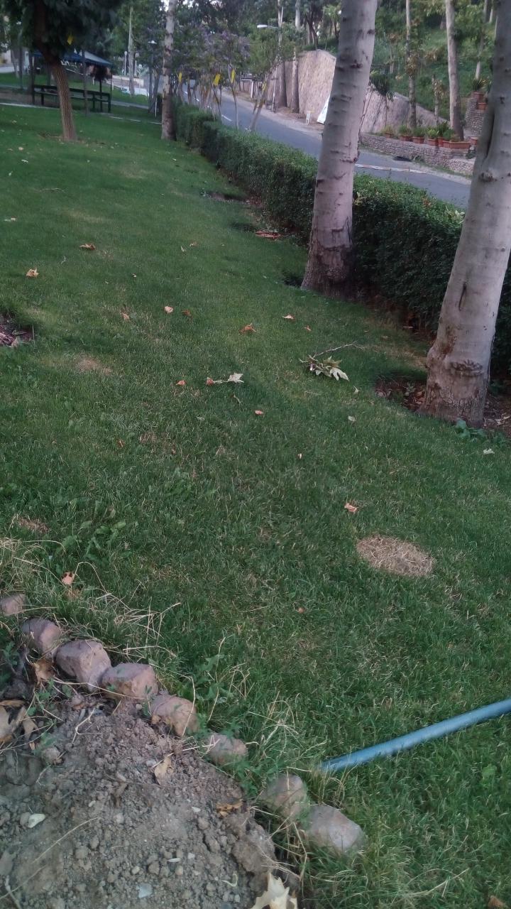 قطع درختان دانشگاه امام صادق علیه السلام